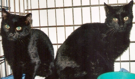 cnh-01-300-rgb-cats1